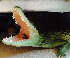 Gater Under Bed